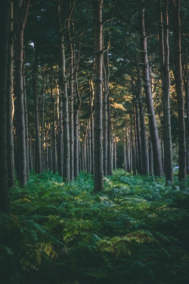 natuurfoto