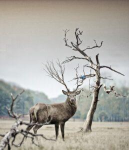 natuur foto